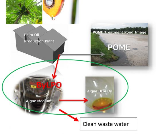 The technologies solve the environmental and economic issues of POME